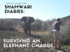 shamwari-diaries-act-1-scene-5-title-card