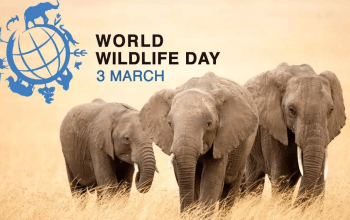 World-wildlife-day-elephant-poster