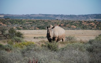 rhino-on-shamwari-game-reserve-south-africa