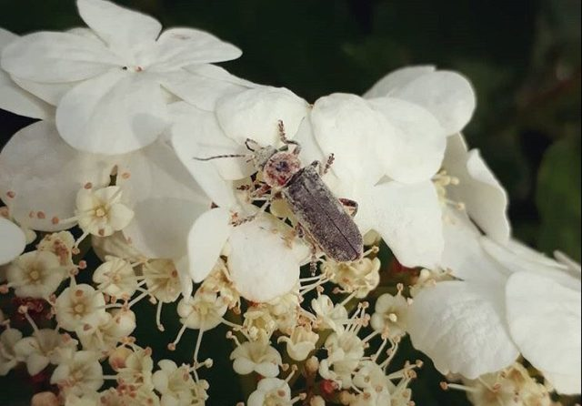 Unidentifed Bug Safari insect