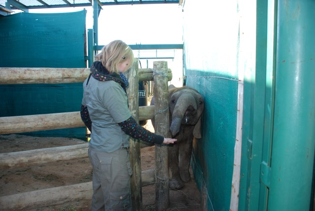 Kate-on-conservation-and-Themba-the-elephant-shamwari