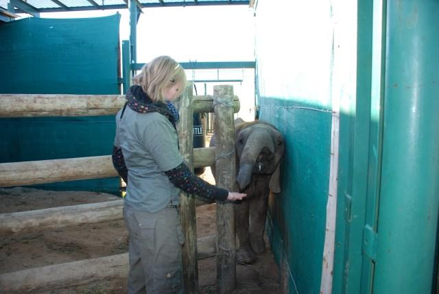 Kate-on-conservation-and-Themba-the-elephant-shamwari
