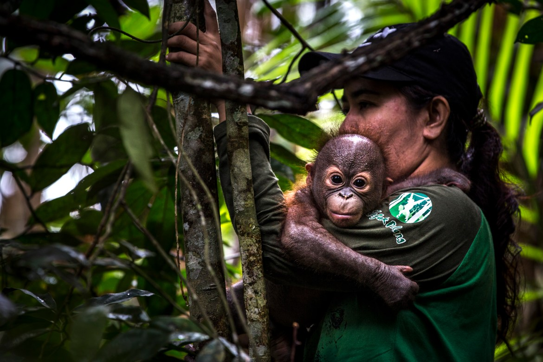 Gerhana-orphan-orangutan-2019