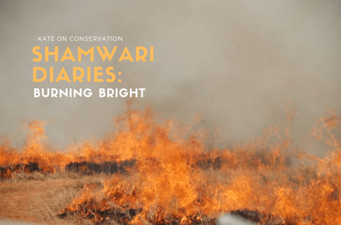 Shamwari Diaries: Act 5 Scene 2 — Burning bright