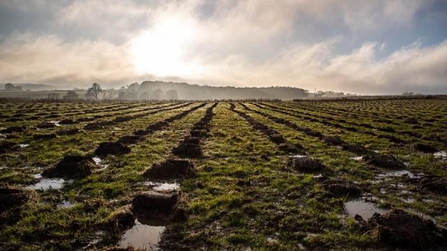 woodland trust Climate fightback field