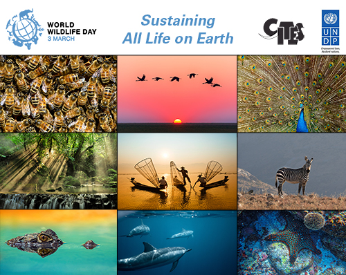 World-Wildlife-day-image