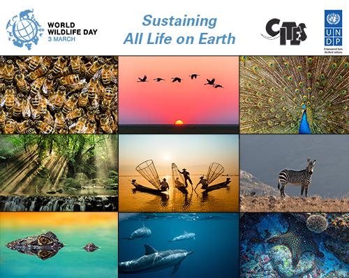World-Wildlife-day-image