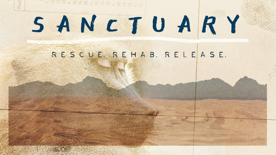 Sanctuary film: The Story of Namibia's first Baboon Rescue Project