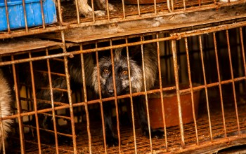 wildlife trade laws - Wild Animal Markets