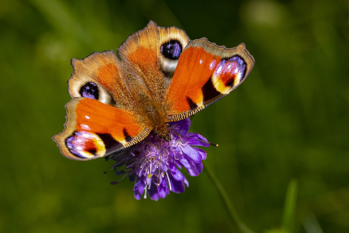 The Best Ways To Bring Pollinators To Your Garden