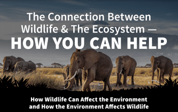 international anti poaching foundation - wildlife and the ecosystem title card