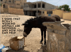 5 signs that Petra's Working Animals are suffering -- and how to help them