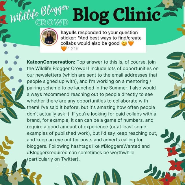 How to be a successful wildlife blogger - Turning blogging into paid work