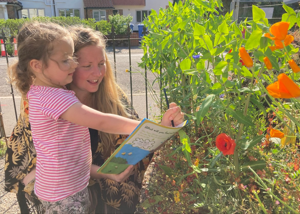 Bug Safari: What to look out for in your garden