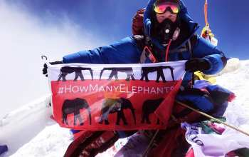 holly budge holds how many elephants flag at the top of mount everest
