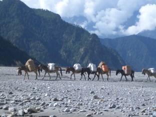 Nepal 2008 2 532