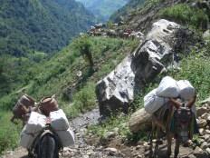 Nepal 2008 147