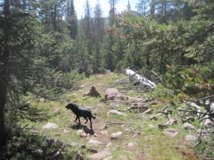 Uintas Rock Creek Basin Sept 2011 086