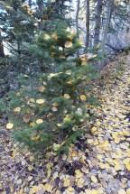 Mother Nature's xmas tree