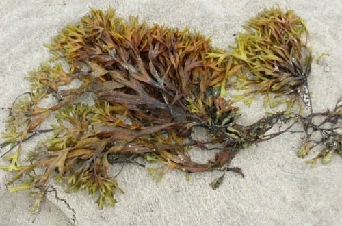 Setting Up A Seaweed Business
