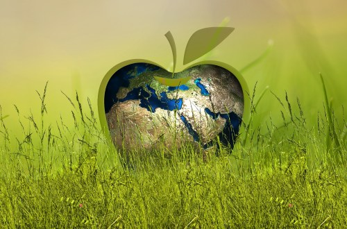 Ways To Live A More Eco-friendly Lifestyle