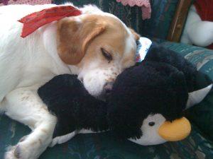 KatersAcres dog, Daisy.
