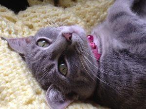 Our kitty cat, Smokie