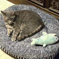 Smokie's New Bed