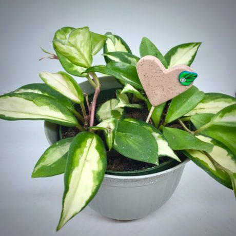 Polymer Clay Deluxe Heart Plant Tag Pokey