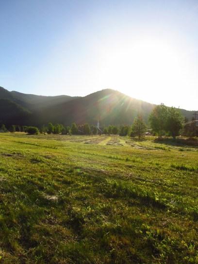 Cut mountain grass
