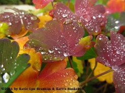 Rainbow and Drops (columbine leaves)