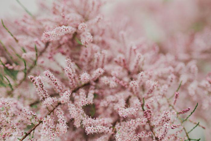kaboompics_Tree bloom in early Spring