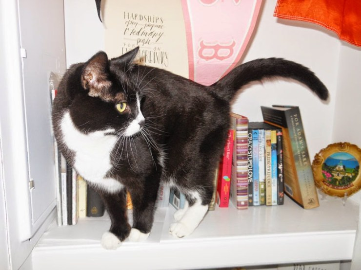 Cats on Bookshelves | Kate the (Almost) Great