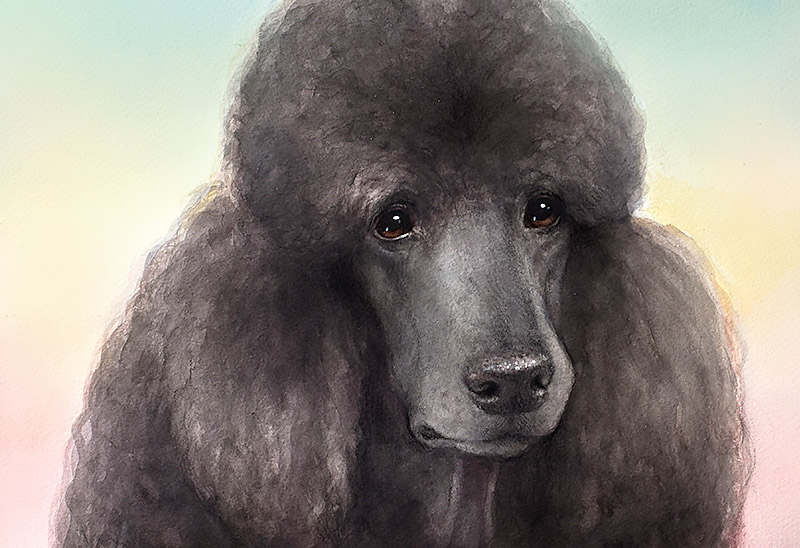 Custom Pet Portrait From Pictures Standard Black Poodle Premium Pet Portrait Luxurious Present Christmas Anniversary Birthday Buy Dog Lover Gift 2018 By Kate Tova Usa