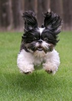 funnnnydoggy