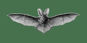 bat, shudder, UK Halloween Attractions
