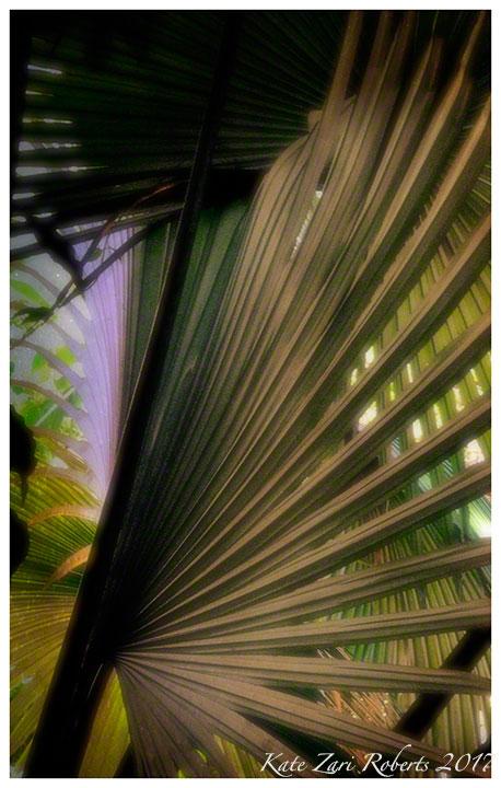 Love-of-Palms