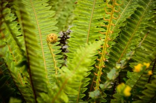 Rotorua (Kath Bicknell)