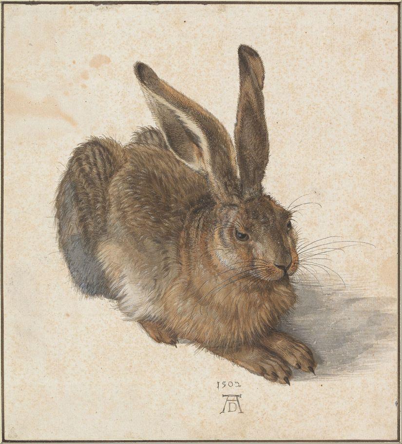 1200px-Albrecht_Dürer_-_Hare,_1502_-_Google_Art_Project