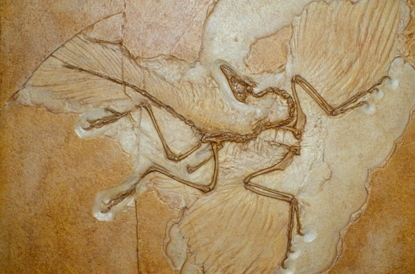 Archaeopteryx-fossil-001