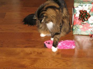 dont-tell-anybody-im-playing-with-a-pink-toy-2014_02_18-18_15_37-utc