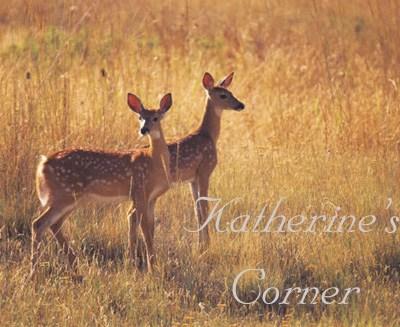 Katherine Corrigan deer in Utah field
