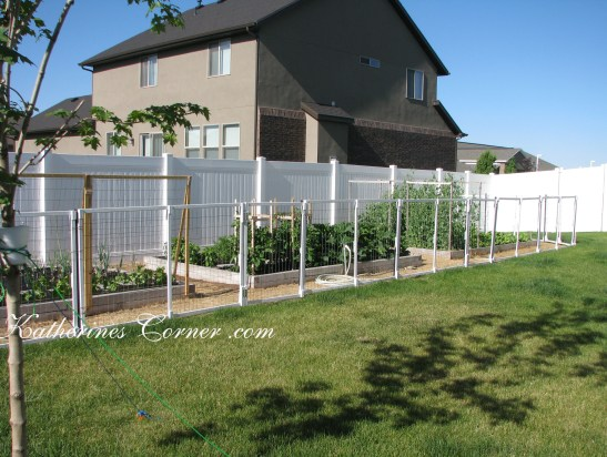 backyard gardening katherines corner