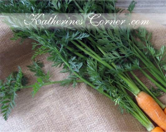 fresh carrot tops photograph
