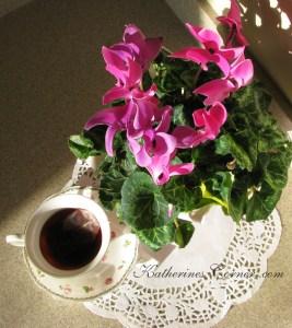 fucia cyclamen flowers