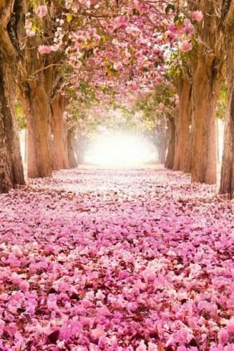 pink valentine inspirations
