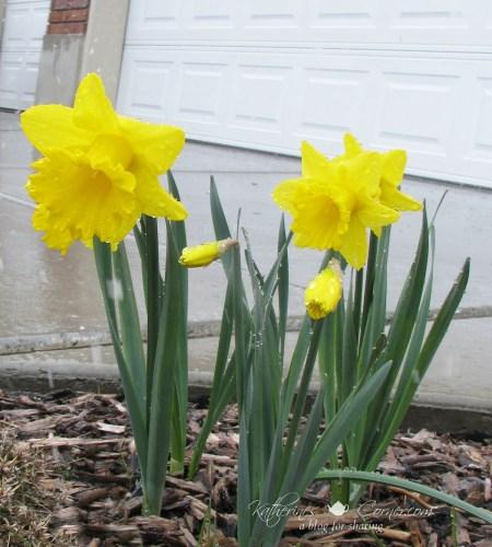spring time in utah