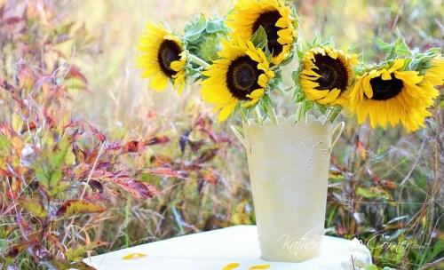 n the bag sunflowers
