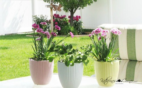 pastel planters with carnations