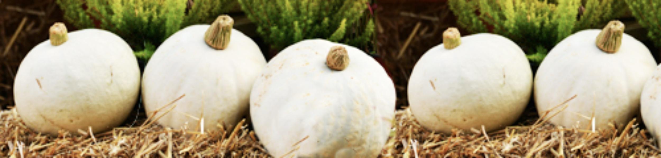 autumn slider pumpkins kcb